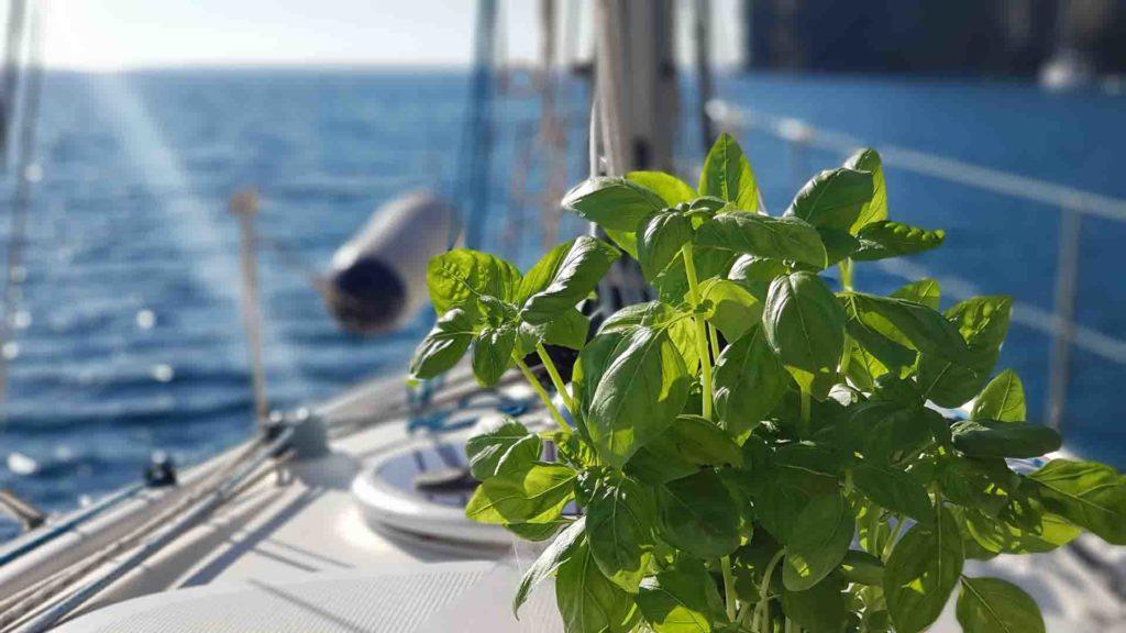 Isola D'Elba crociera di una settimana: Lavagna, Portovenere, Capraia Esperienze Di Vela